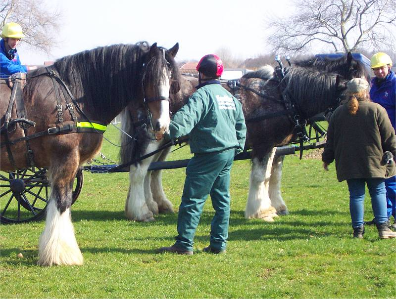 shires with burned feather
